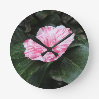 Single red streaked white flower Camellia japonica Round Clock