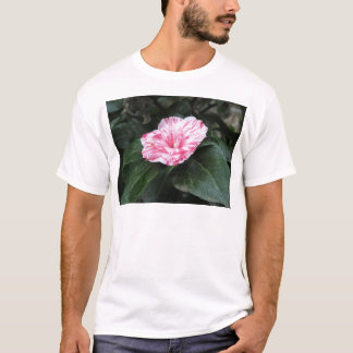 Single red streaked white flower Camellia japonica T-Shirt