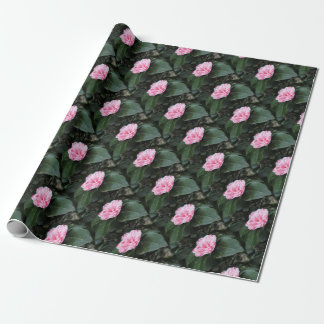 Single red streaked white flower Camellia japonica Wrapping Paper