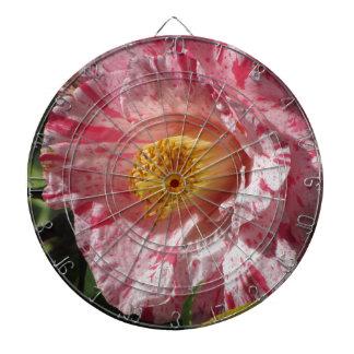 Single red streaked white flower of Camellia Dartboard