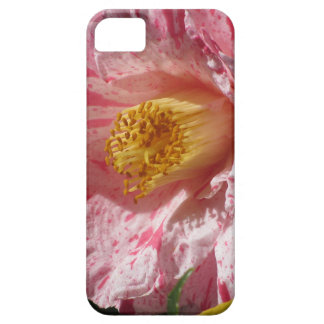 Single red streaked white flower of Camellia iPhone 5 Covers