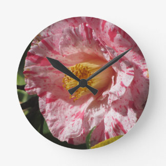 Single red streaked white flower of Camellia Round Clock