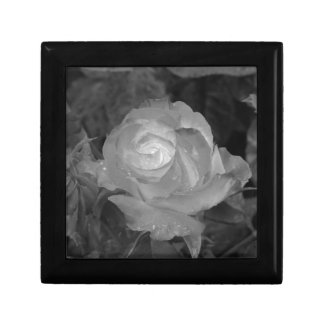 Single rose flower with water droplets in spring gift box