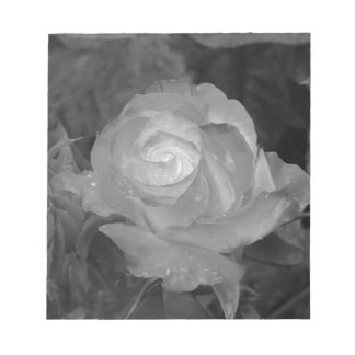 Single rose flower with water droplets in spring notepad