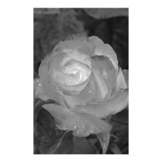 Single rose flower with water droplets in spring stationery