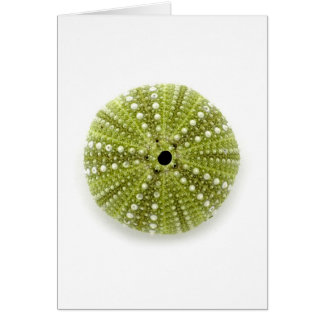 Single Sea Urchin Card