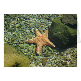 Single Starfish Card