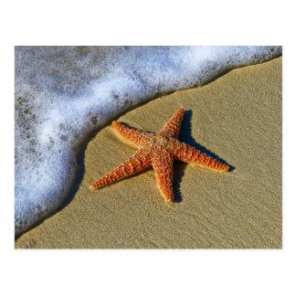 Single Starfish on Beach Postcard