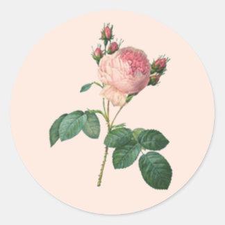 Single Stem English Rose Botanical Classic Round Sticker