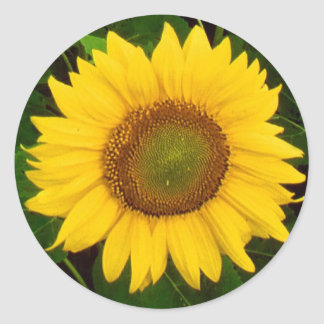 Single Sunflower Green Leaves Yellow Flower Classic Round Sticker