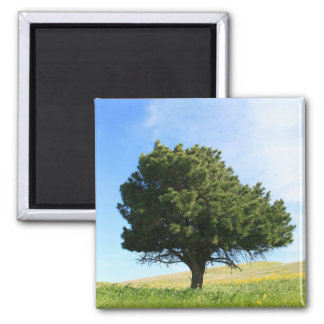 Single Tree Magnet