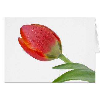 Single Tulip Card