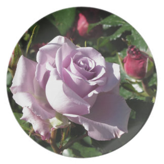 Single violet rose flower with red roses around dinner plates