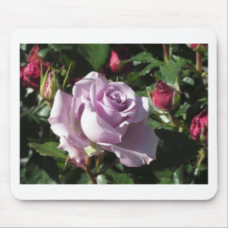Single violet rose flower with red roses around mouse pad