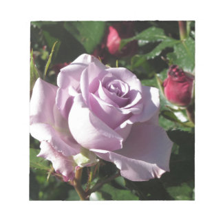 Single violet rose flower with red roses around notepad