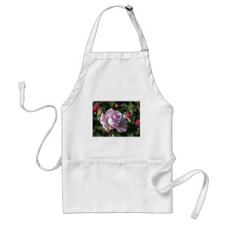 Single violet rose flower with red roses around standard apron