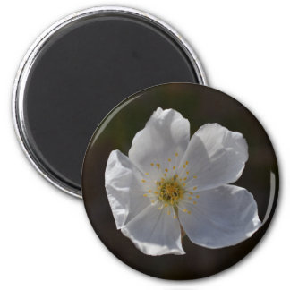 Single White blossom 2 Inch Round Magnet