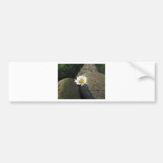 Single white daisy flower between the stones bumper sticker