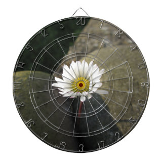 Single white daisy flower between the stones dartboard