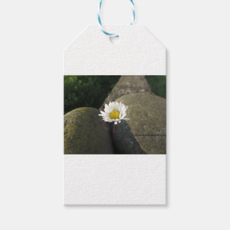 Single white daisy flower between the stones gift tags