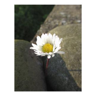 Single white daisy flower between the stones letterhead