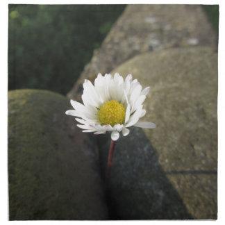 Single white daisy flower between the stones napkin