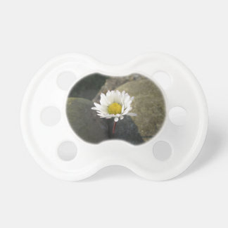 Single white daisy flower between the stones pacifier