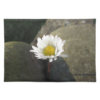 Single white daisy flower between the stones placemat