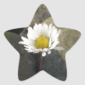 Single white daisy flower between the stones star sticker
