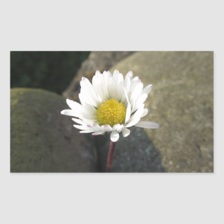 Single white daisy flower between the stones sticker