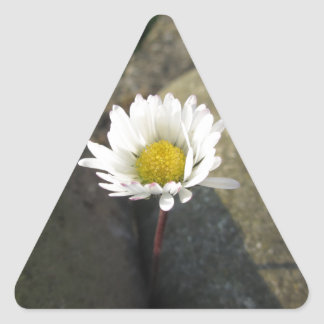 Single white daisy flower between the stones triangle sticker