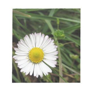 Single white daisy flower on green background notepad