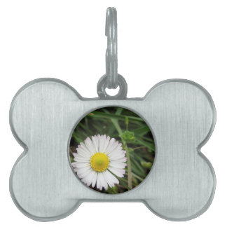 Single white daisy flower on green background pet name tags