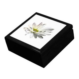 Single White Daisy Gift Box