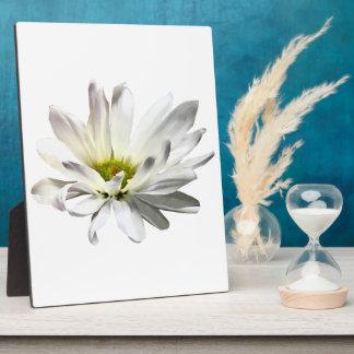 Single White Daisy Plaque