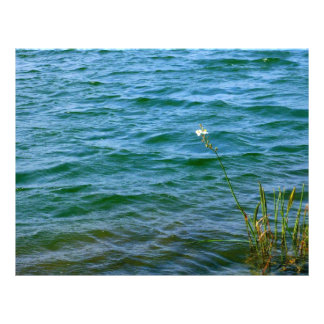 Single white flower water reed pond letterhead