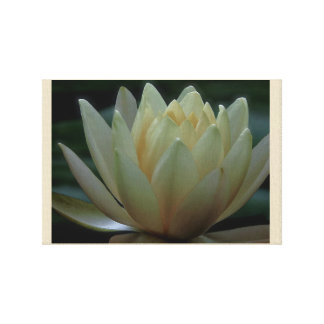Single White Lotus Water Lily Extreme Close Up Canvas Print