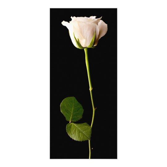 Single white rose on a black background rack card