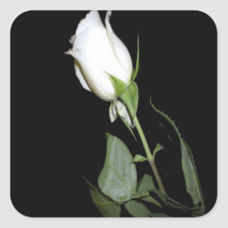 Single White Rose Square Sticker