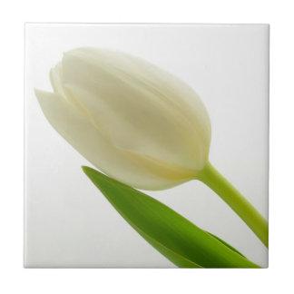 Single White Tulip Tile