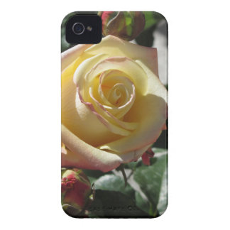 Single yellow rose flower in spring iPhone 4 case