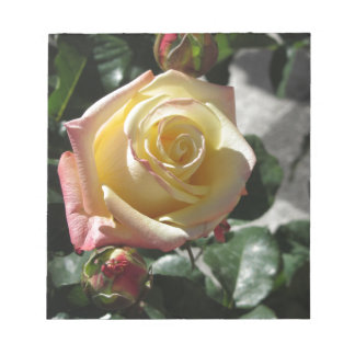 Single yellow rose flower in spring notepad