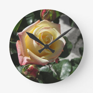 Single yellow rose flower in spring round clock