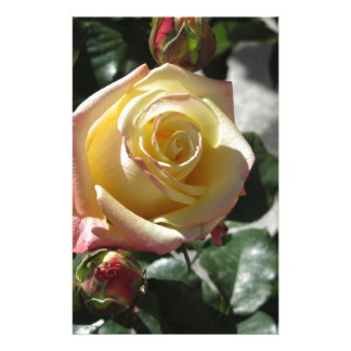 Single yellow rose flower in spring stationery