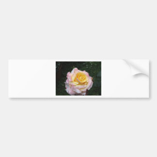 Single yellow rose flower with water droplets bumper sticker