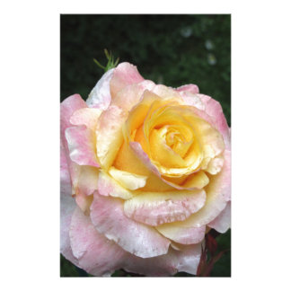 Single yellow rose flower with water droplets stationery