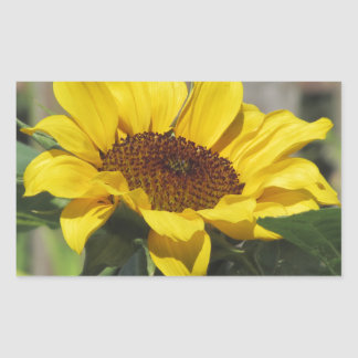 Single yellow sunflower with green leaves