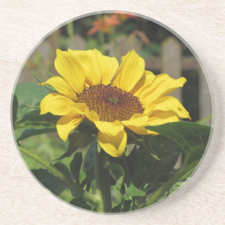 Single yellow sunflower with green leaves coaster