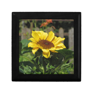 Single yellow sunflower with green leaves gift box