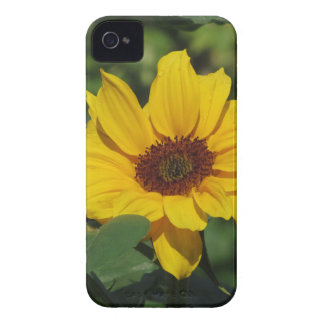 Single yellow sunflower with green leaves iPhone 4 covers